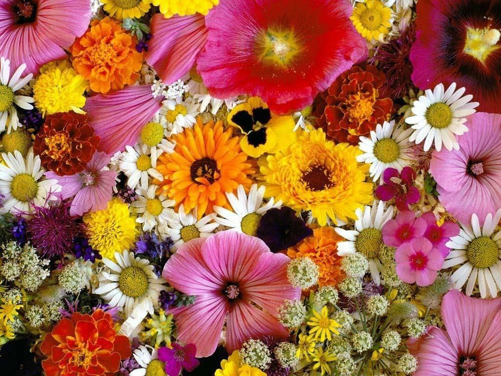 10 Flores que gustan a todas las mujeres más allá de las rosas